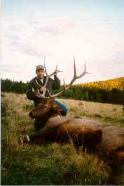 Colorado Elk - Trophy Hunts Sangre De Cristo Outfitters