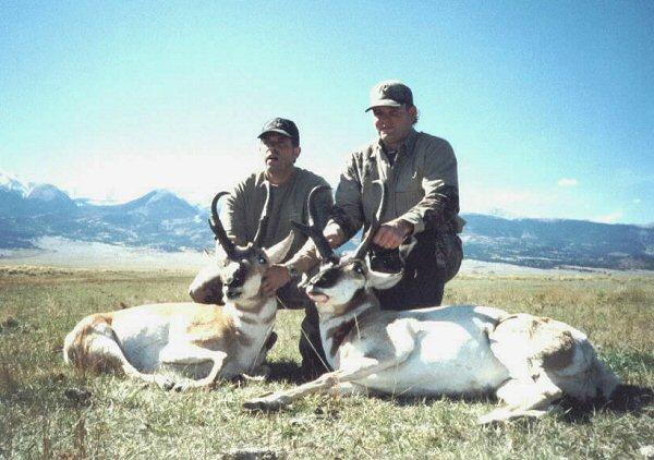 Antelope 2003