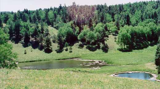 Mountain Meadows Ranch